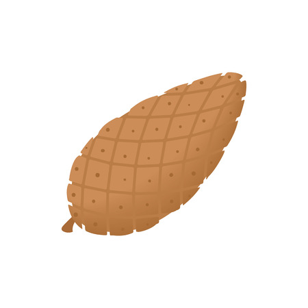 fir cone: Fir cone icon in cartoon style isolated on white background. Plants symbol