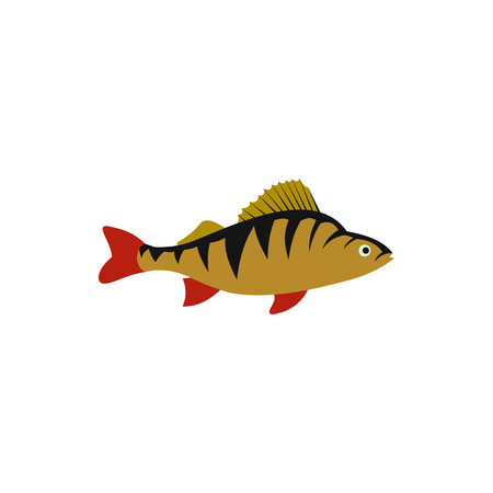 perca: Perch fish icon in flat style on a white background
