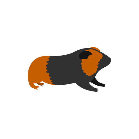 guinea pig: Guinea pig, cavy icon in flat style on a white background Illustration