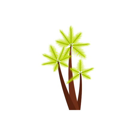 subtropical: Three tropical palm trees icon in flat style isolated on white background. Flora symbol Illustration