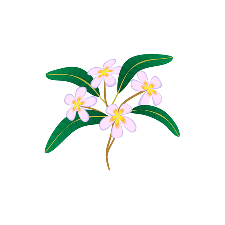 fragrant bouquet: Flower plumeria icon in cartoon style isolated on white background. Plant symbol