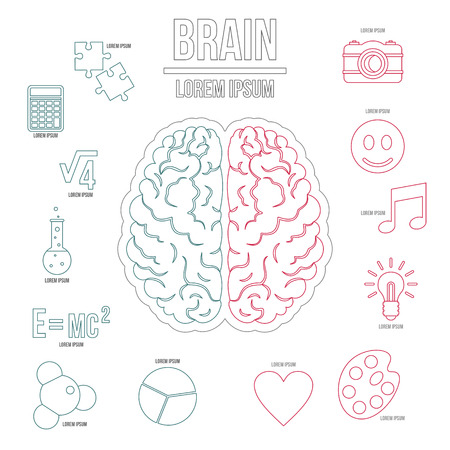 brain function: Human brain infographics set in outline style. Brain function set collection vector illustration