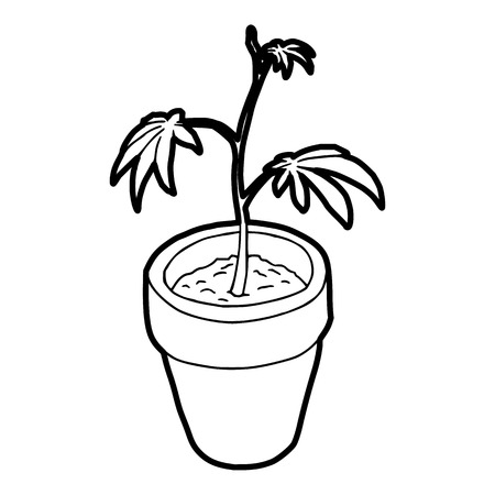 sativa: Cannabis plant icon in outline style on a white background vector illustration