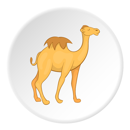 humped: Camel icon. Cartoon illustration of camel vector icon for web Illustration