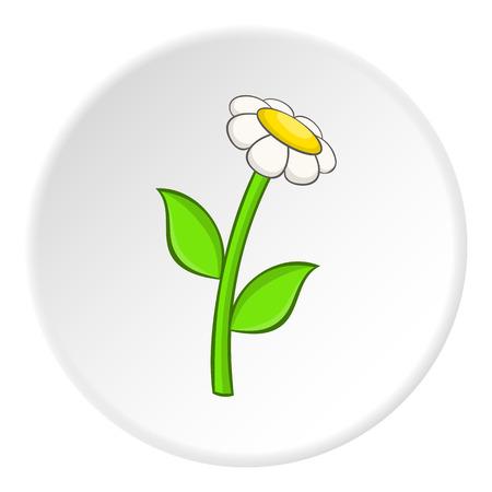 daisy vector: Daisy icon. Cartoon illustration of daisy vector icon for web Illustration