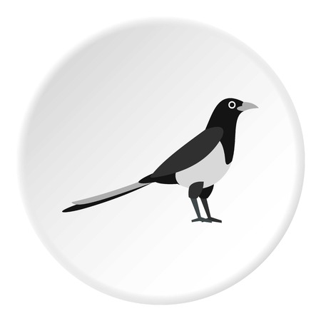 magpie: Magpie icon. Flat illustration of magpie vector icon for web design