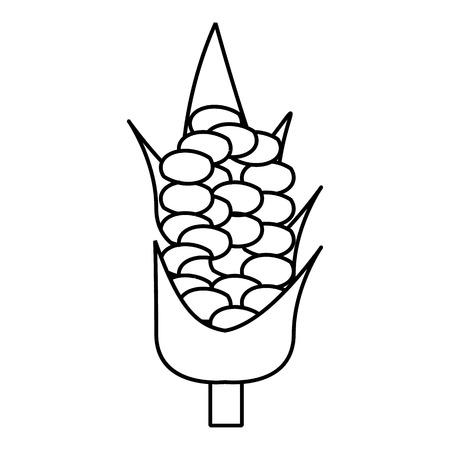 corncob: Corncob icon. Outline illustration of corncob vector icon for web