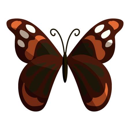Multicolored butterfly icon. Cartoon illustration of multicolored butterfly vector icon for web