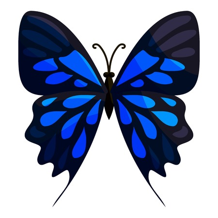 mormon: Big butterfly icon. Cartoon illustration of big butterfly vector icon for web