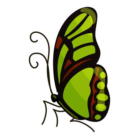 mormon: Green butterfly icon. Cartoon illustration of green butterfly vector icon for web