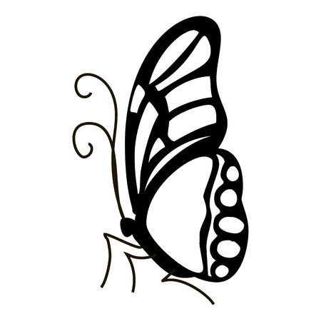 mormon: Contour butterfly icon. Simple illustration of contour butterfly vector icon for web Illustration
