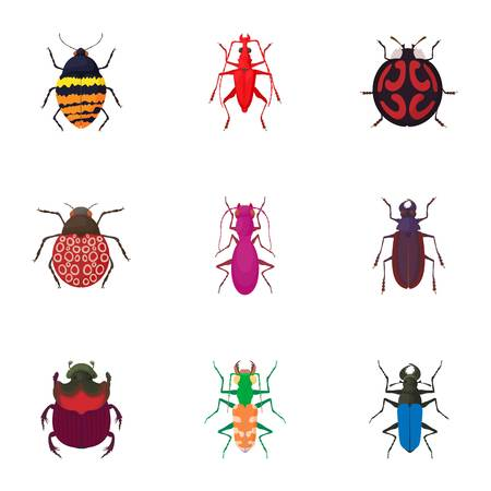coleoptera: Order coleoptera icons set. Cartoon illustration of 9 order coleoptera vector icons for web Illustration