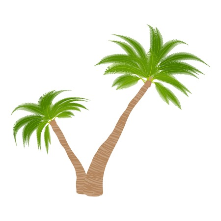 Two palm trees icon. Cartoon illustration of two palm trees vector icon for web Illustration