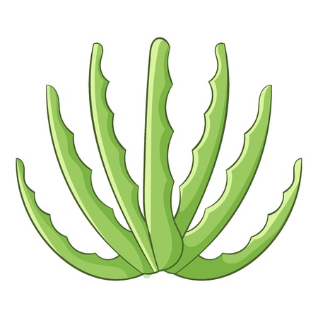 agave: Agave icon. Cartoon illustration of agave vector icon for web