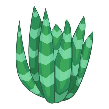 agave: Spotted agave icon. Cartoon illustration of spotted agave vector icon for web
