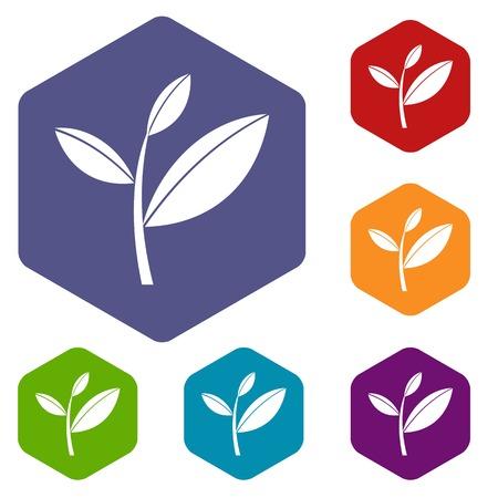 Tea leaf sprout icons set