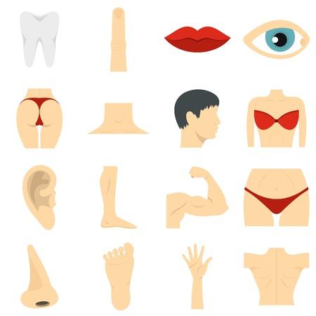 Body parts set flat icons Çizim