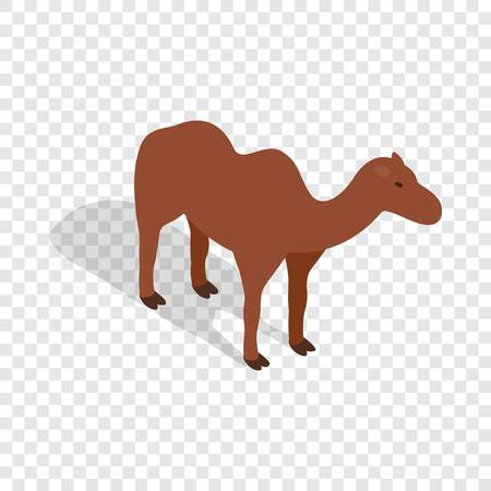 hump: Camel isometric icon 3d on a transparent background vector illustration Illustration