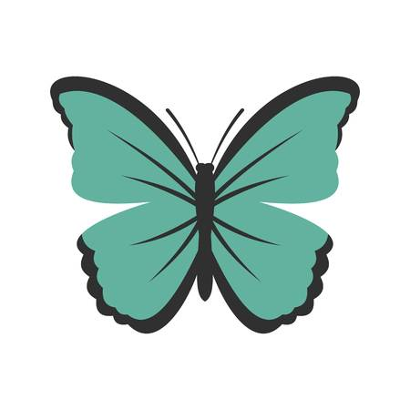 Insect butterfly icon, flat style Illustration