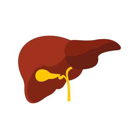 Liver icon, flat style