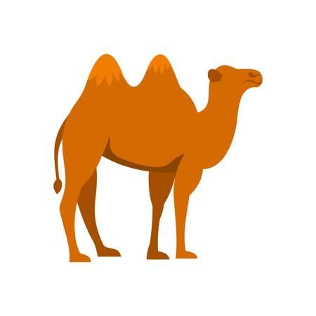 hardy: Camel icon, flat style Illustration