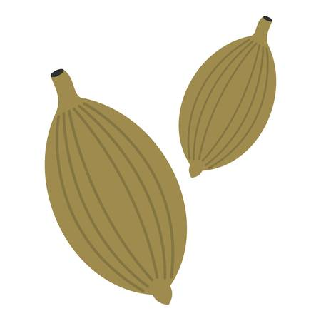 Green cardamom pods icon isolated
