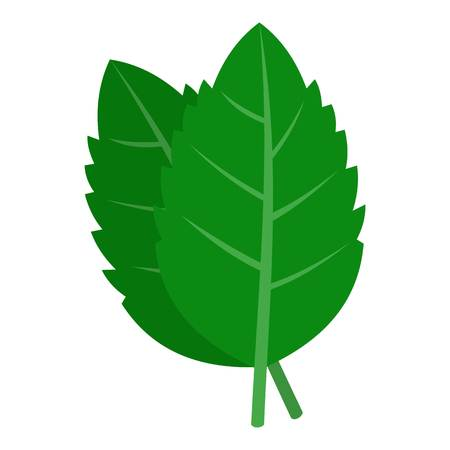 Fresh green basil leaves icon isolated