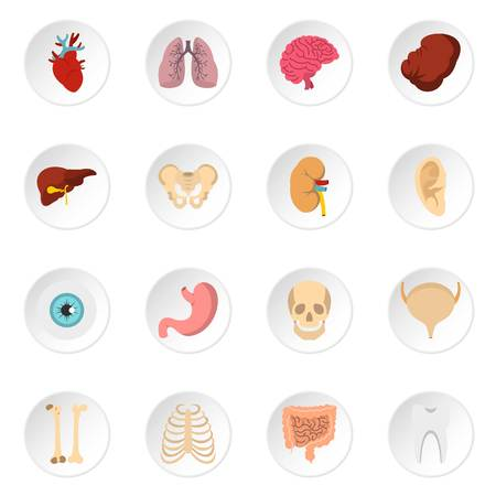 digestive system: Human organs set flat icons