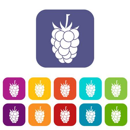 dewberry: Blackberry fruit icons set vector illustration in flat style In colors red, blue, green and other