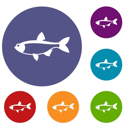 common carp: Rudd fish icons set in flat circle reb, blue and green color for web