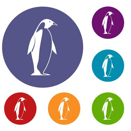 King penguin icons set in flat circle red, blue and green color for web