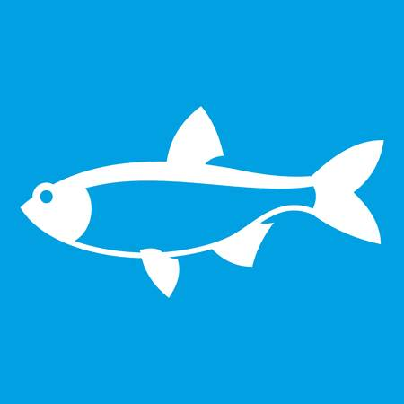 common carp: Rudd fish icon white isolated on blue background vector illustration