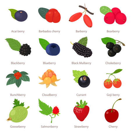Berries icons set. Cartoon illustration of 16 berries vector icons for web Çizim