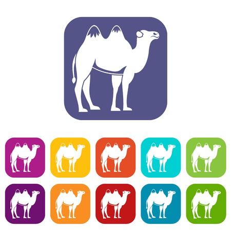 middle: Camel icons set vector illustration in flat style in colors red, blue, green, and other