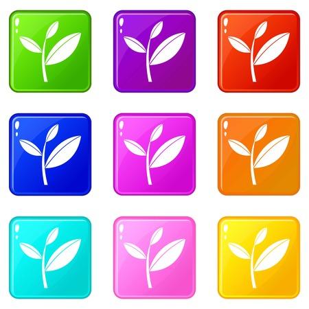 tea plantation: Tea leaf sprout set 9 Illustration