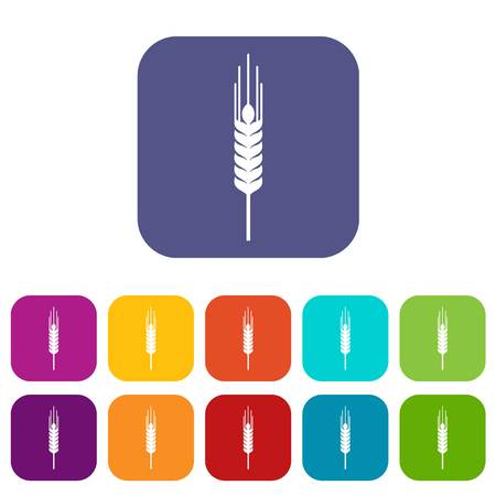 Stalk of ripe barley icons set vector illustration in flat style in colors red, blue, green, and other