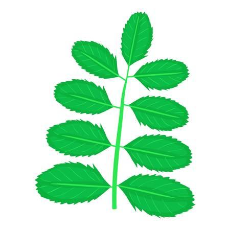 Acacia leaf icon, cartoon style Illustration