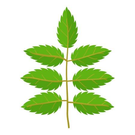 vegetate: Rowan leaf icon, cartoon style Illustration