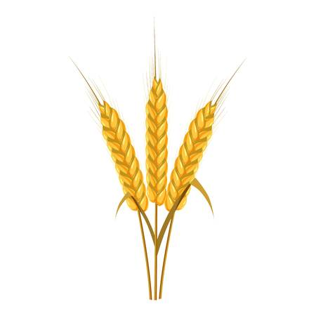 Spikelets of wheat icon. Cartoon illustration of wheat ears vector icon for web design Ilustrace