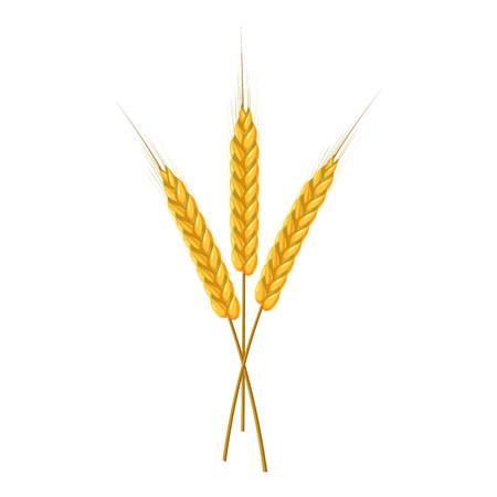 Three ripe ears wheat icon. Cartoon illustration of wheat ears vector icon for web design