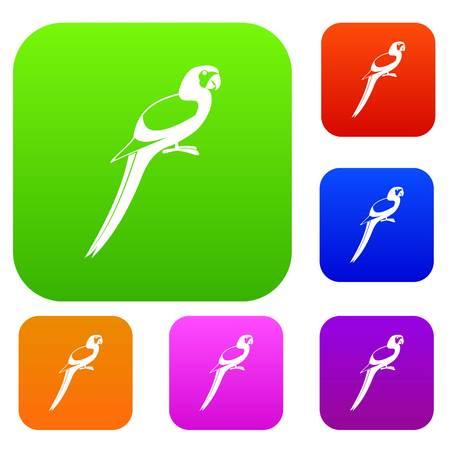 genus: Parrot set collection Illustration