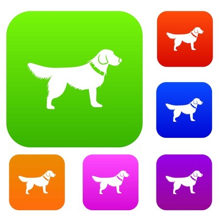 Dog set collection