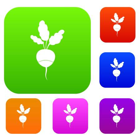Fresh radish set icon in different colors isolated vector illustration. Premium collection