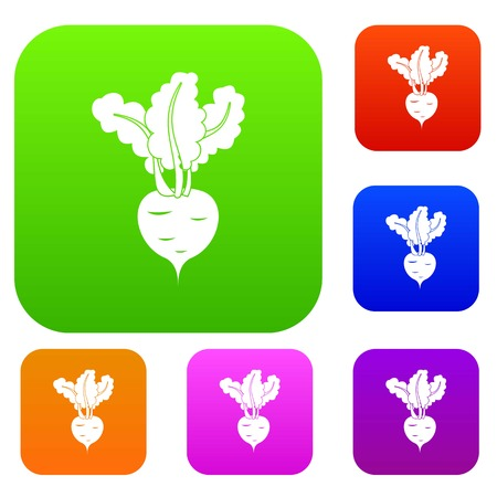 Fresh beetroot set icon in different colors isolated vector illustration. Premium collection