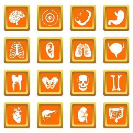 Human organs icons set orange