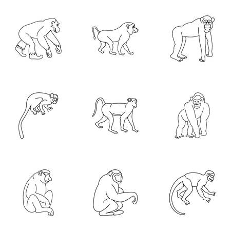 Species of monkey icon set, outline style Illustration