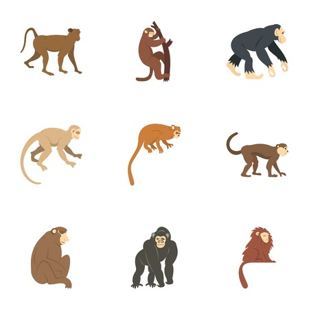 Jungle monkey icon set, flat style