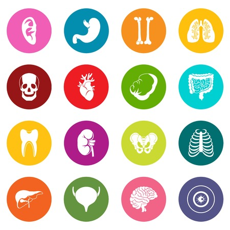 Human organs icons many colors set isolated on white for digital marketing