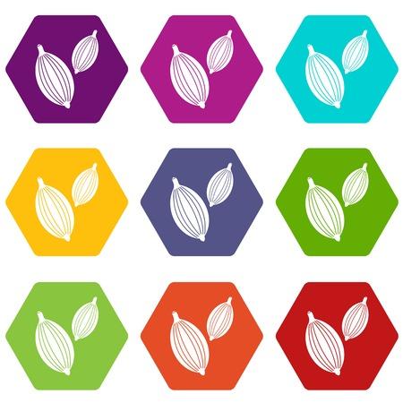 Cardamom pods icon set color hexahedron Illustration
