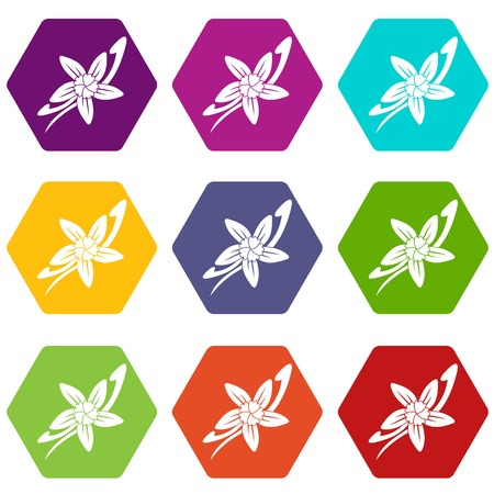 Vanilla sticks with a flower icon set many color hexahedron isolated on white vector illustration Illustration